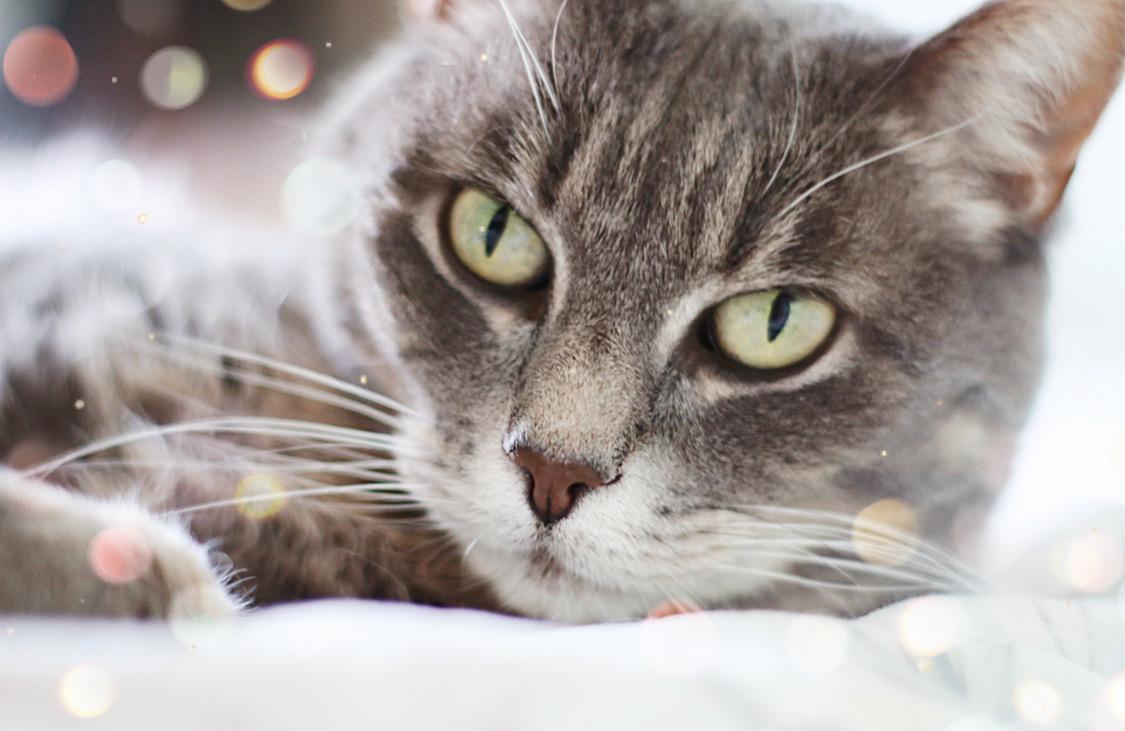 conseils accueil chaton